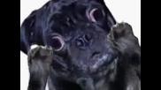 Пеещото Куче