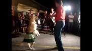 Куче танцува като човек!!!