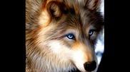 wolf - bate pe6o feat. Tina - Wolf