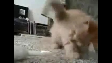 Котенце срещу четка за зъби !