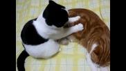Котка прави масаж !