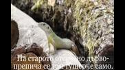 Горска История - Арабаджиева
