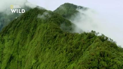 Тайната на гората в Папуа - плодните прилепи