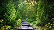 Relaxing Piano Music Elvenpath Soothing Forest Music