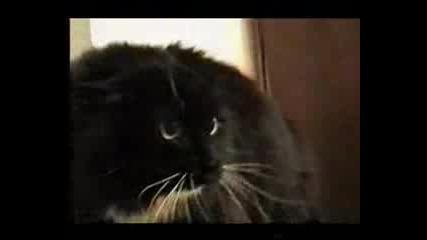 Talking Cat - Говореща котка