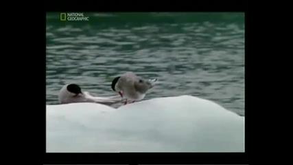 Райски места - Ледниковия залив Част 2