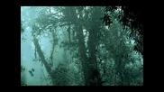 Отпускащата сила на горския дъждец