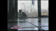 Най - смешното котешко видео :)))