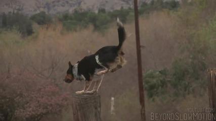 The Parkour Dog ..