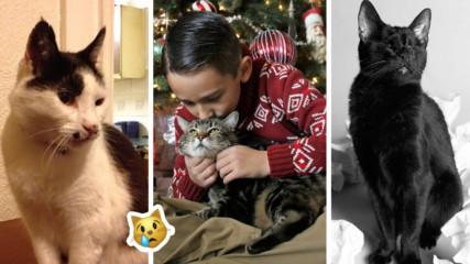 Тези истории ще ви просълзят: 5 котки герои, спасили човешки животи! И не само...