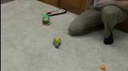 Папагал прави 20 трика за 2 минути
