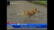 обесиха куче в София
