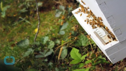 Survey: Almost Half of All Bee Hives in the U.S. Died in Past Year