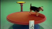 Beneful се игра на нови места с този изобретателен машина Dog Goldberg задвижвани от кучетата и люби