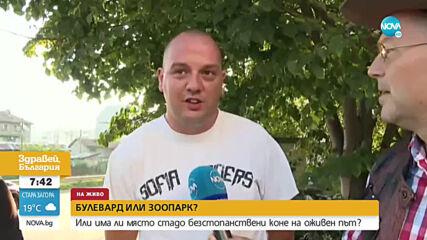 """Коне се разхождат свободно по бул. """"Андрей Ляпчев"""""""