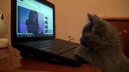 Дори и котките слушат Селена Гомез! :d