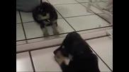 54d9a111 Зеркало и щенок.