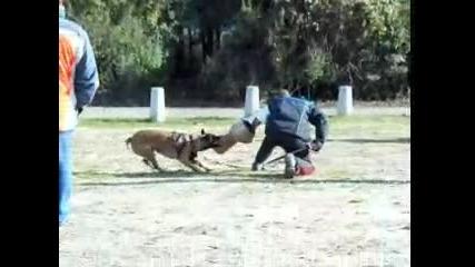 Обучение куче защита