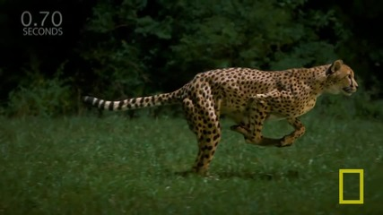 National Geographic Live! - Greg Wilson_ Cheetahs on the Run