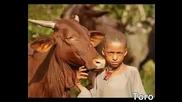 Децата по света в снимки