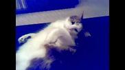 Ядосана, мързелива котка - звяр!!!!