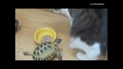 Смях - Костенурка Тероризира Котки!