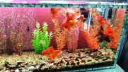 Моите аквариуми - две години част от спомени