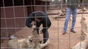 Лъв едва не убива репортер на Daily Telegraph