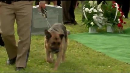 Респект! Полицейско куче отдава почит на своя колега!