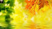 Бесплатно - Осенние листья