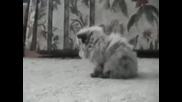 Много сладко котенце :ppp