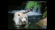 Удивителни снимки на нашата природа !!!