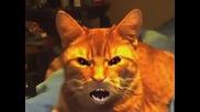 Котка тигър