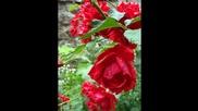 Цветя 03.07.2011г.