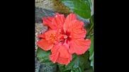 П. И. Чайковски- Валс на цветята
