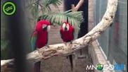 Папагали се кефят на рап