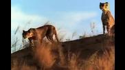 Леопард срещу... (discovery)