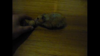 Prokletiq hamster :d