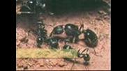 На Мравките Правех Път - Велчо Велев