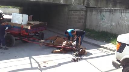 Роми пребиха кон, за да тегли каруца с желязо