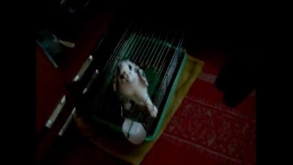 мини зайче