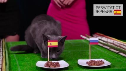 Испания ще поведе в битката срещу Русия според котето-оракул ВладИмир