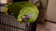 Папагал имитира бебешки рев