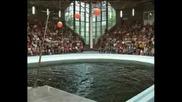Шоуто на делфините във Варненския делфинариум
