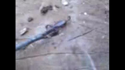Otroven Skorpion