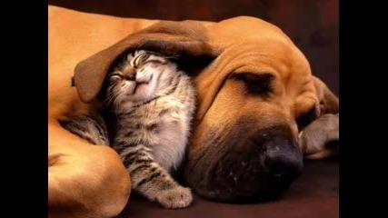 Сладички Котенца И Кученца 2 - Ра Част