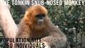 Най-застрашените животни на света..