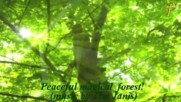 """Зелено спокойствие! ... ( Relaxing music - """" Peaceful Forest"""" by Tim Janis)"""