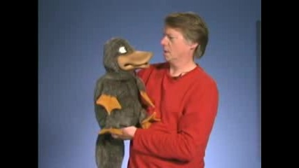 The P - P - Platypus Song