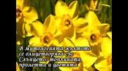 Магията На Жълтото И Какво Ни Разкрива То